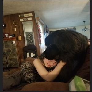 adoptable Dog in North Java, NY named Vader