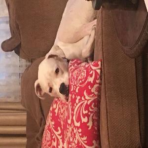 adoptable Dog in Logan, WV named Bojangles