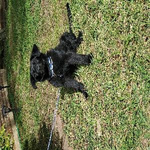 adoptable Dog in Arlington, TX named Bowe