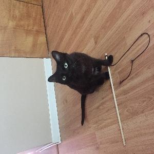 adoptable Cat in Albuquerque, NM named Fitz