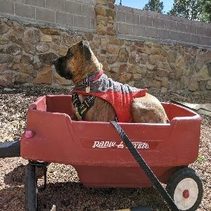 adoptable Dog in Santa Fe, NM named Kaylee