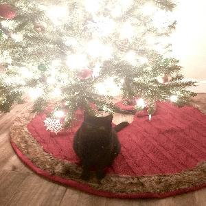 adoptable Cat in Norfolk, VA named Girl kitty