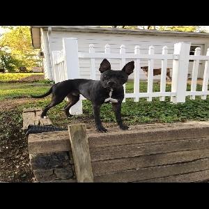 adoptable Dog in Bridgeton, MO named Martin