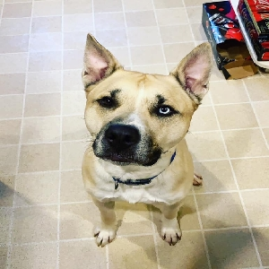 adoptable Dog in Enfield, CT named Brady
