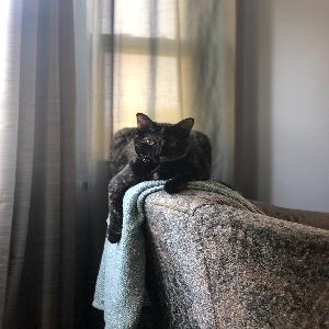 adoptable Cat in Cincinnati, OH named Elsa Kitty