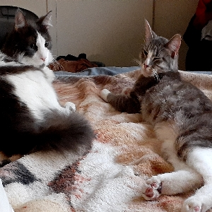 adoptable Cat in Waterbury, CT named Kiki & Boomer