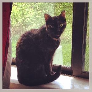 adoptable Cat in Maineville, OH named Zuzu