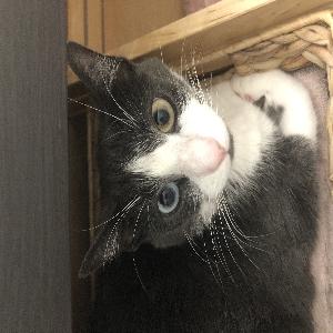 adoptable Cat in Stamford, CT named Freya
