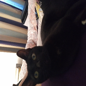 adoptable Cat in Waipahu, HI named Flo