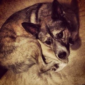 adoptable Dog in Cincinnati, OH named Monty