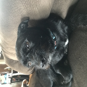 adoptable Dog in Bossier City, LA named Jack