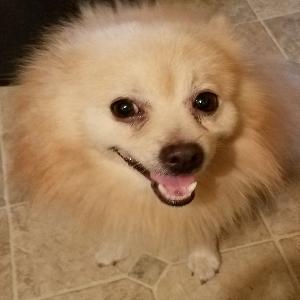 adoptable Dog in Jamaica, NY named CHET