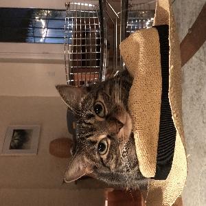 adoptable Cat in New York, NY named Sprite