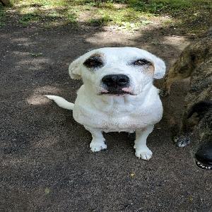 adoptable Dog in Villa Rica, GA named Lucy