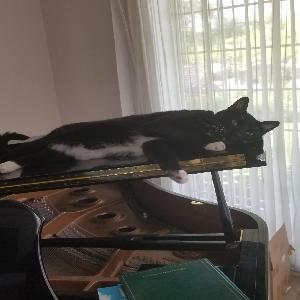 adoptable Cat in Salt Lake City, UT named Wick