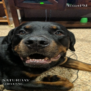 adoptable Dog in Cheyenne, WY named Zues
