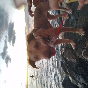adoptable Dog in Lahaina, HI named Leilei