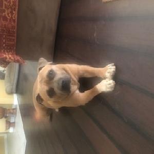 adoptable Dog in Redlands, CA named Chase