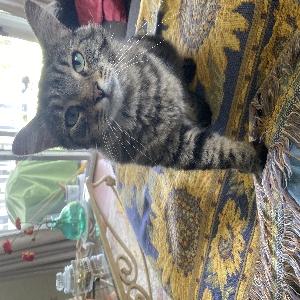 adoptable Cat in Grand Rapids, MI named Lou Lou