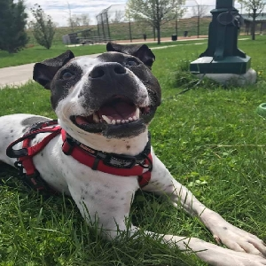 adoptable Dog in Des Moines, IA named Enzo