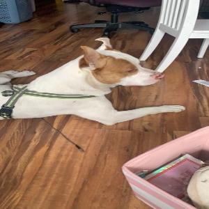 adoptable Dog in Fremont, MI named Carousel