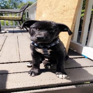 adoptable Dog in Lawrenceville, GA named Oso