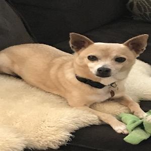 adoptable Dog in North Las Vegas, NV named Eddie