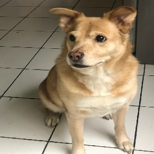 adoptable Dog in Metairie, LA named Cola