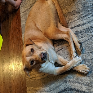 adoptable Dog in Massillon, OH named Athena