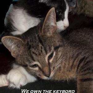 adoptable Cat in Lawrenceville, GA named Taz and Ringo