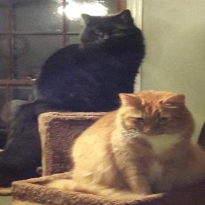adoptable Cat in Canton, GA named Astro