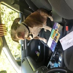 adoptable Dog in Floral Park, NY named Skye