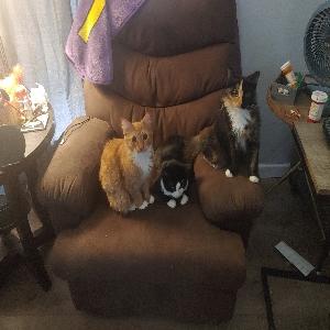 adoptable Cat in Cypress, TX named Jax