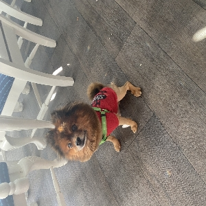 adoptable Dog in North Las Vegas, NV named Alex