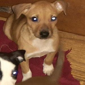 adoptable Dog in Macon, GA named Bootsie