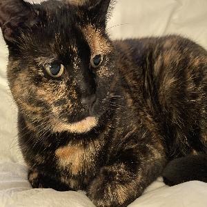 adoptable Cat in New York, NY named Suzy