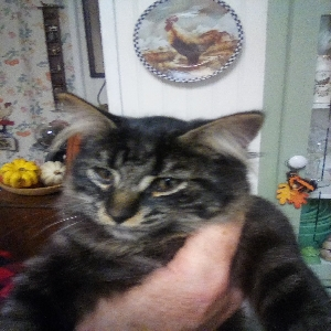 adoptable Cat in Minden City, MI named Wolfie