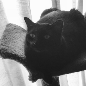 adoptable Cat in Barberton, OH named Pepper