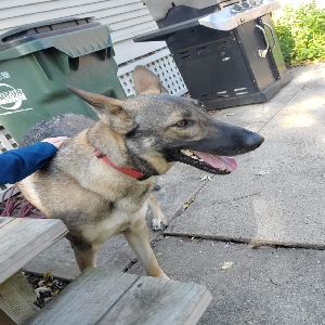 adoptable Dog in Cleves, OH named Mona