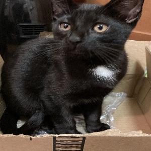 adoptable Cat in Virginia Beach, VA named Pickles