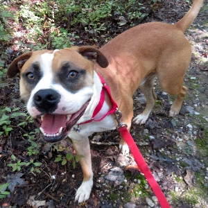 adoptable Dog in Troy, VA named Bogey