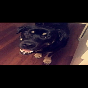adoptable Dog in Anaconda, MT named Caleb
