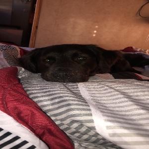 adoptable Dog in Monroe, LA named Buddy