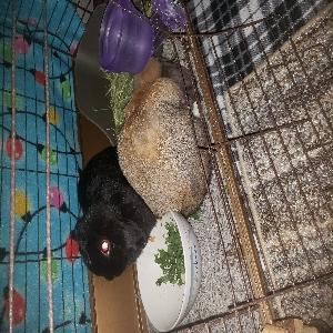 adoptable  in Vancouver, WA named Ella and Stella