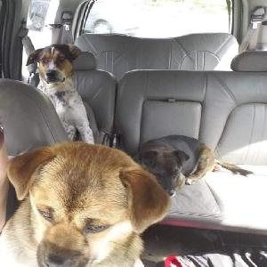 adoptable Dog in Poulsbo, WA named Sitka