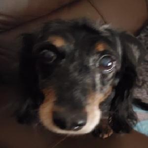adoptable Dog in Sugarloaf, PA named Rosie