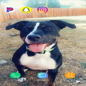 adoptable Dog in Orting, WA named Miley