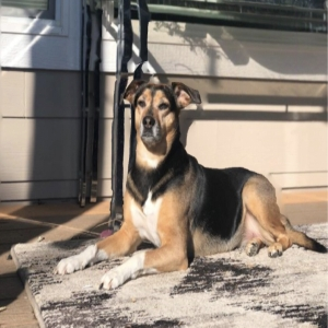 adoptable Dog in Spokane, WA named Luna