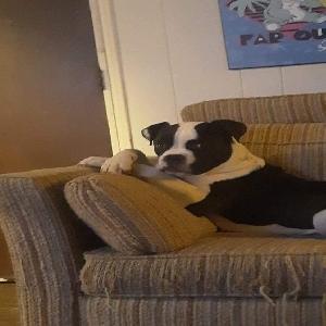 adoptable Dog in Walla Walla, WA named Bonez