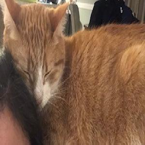 adoptable Cat in Ocean Springs, MS named Ivan